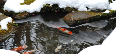Koiteich im Winter, Teich im Winter, Teichpflege im Winter, Teichheizung