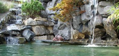 Teichbau, Wasserfall, Bachlauf, Gartenteich, Fischteich