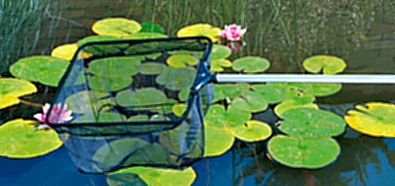 Teichpflege Teich, Gartenteich, Fischteich, Kescher, Algen